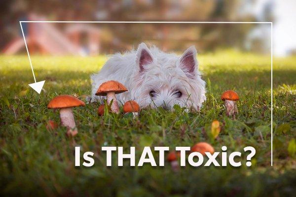 white dog near mushroom