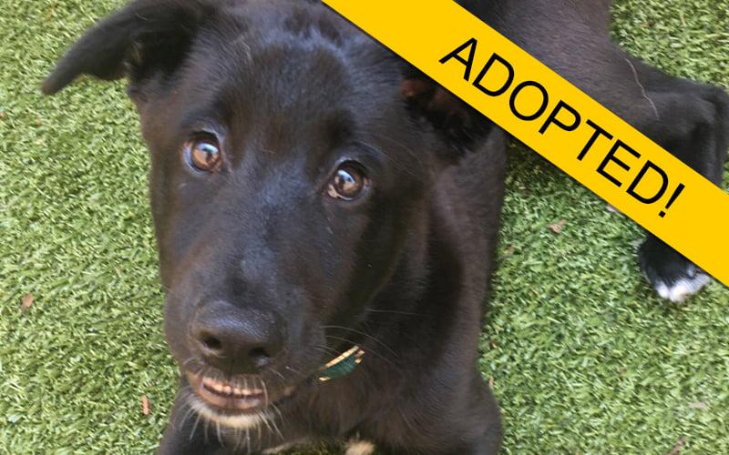 adopted dog