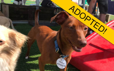 Adopted photo of dog